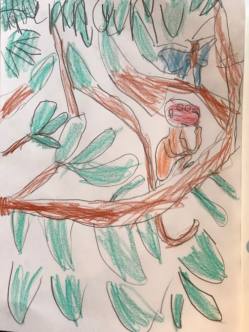 HLW Monkey Puzzle Tree